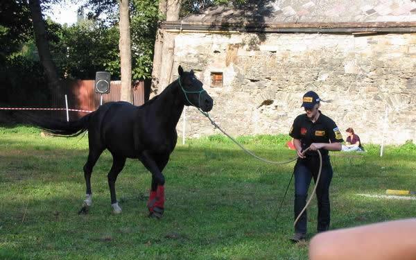 ukázka výcviku koní