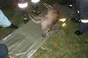 Záchrana poraněného zvířete ( událost č. 11/2009 )